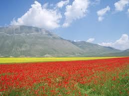 Il Pian grande di Castelluccio di Norcia e la fioritura